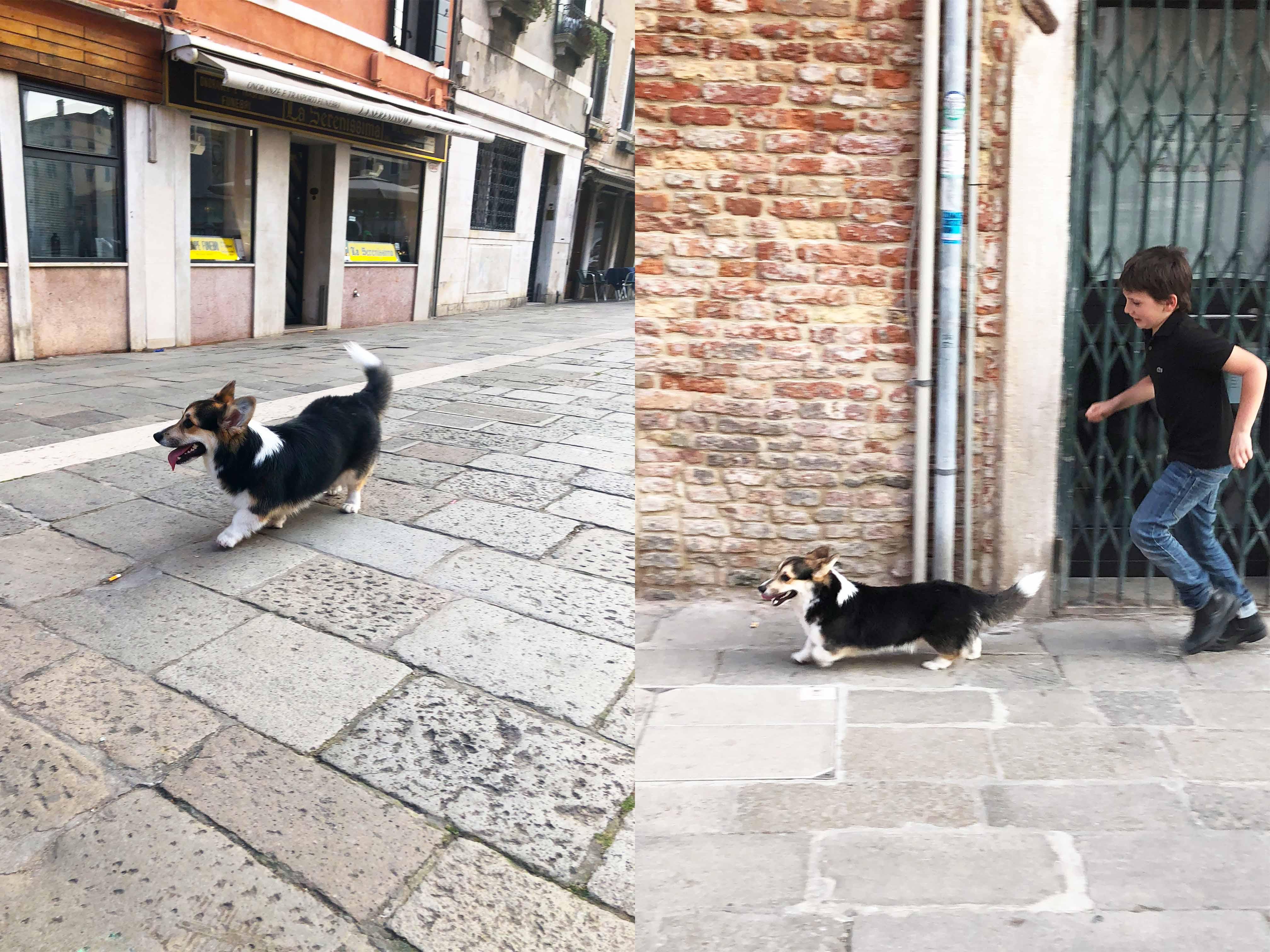 威尼斯巧遇小柯基與男孩