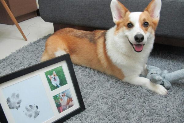 DIY狗手印相框|製造與毛小孩回憶,值得紀念的珍藏品