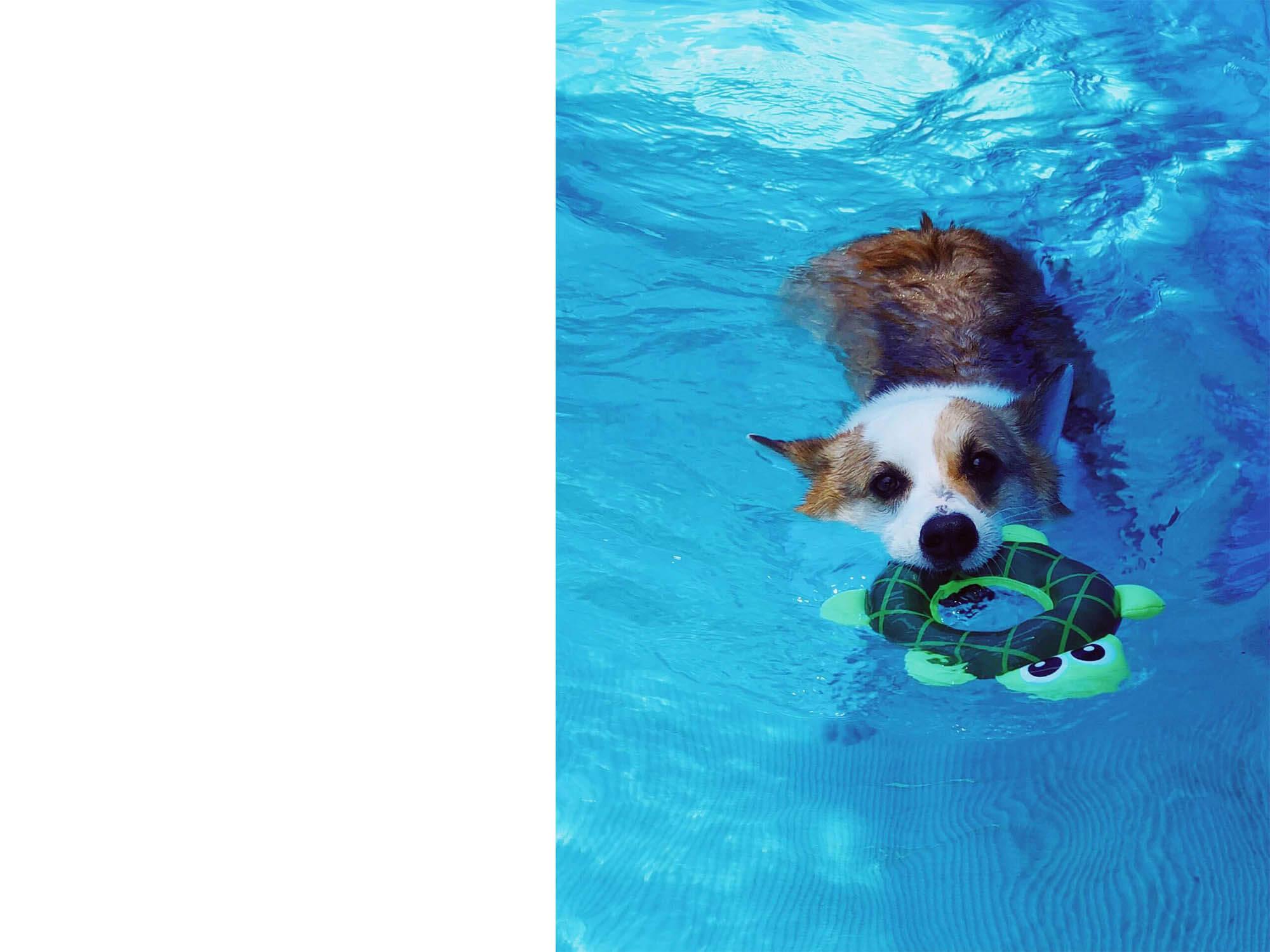 金牌Mi'lu_游泳去