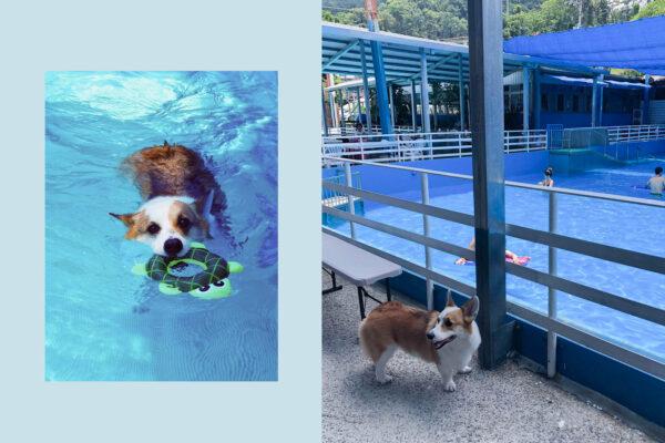 台北妙狗寵物游泳池|Mi'lu的最愛游泳場地,舒適清澈的烏來山泉水,一票到底!