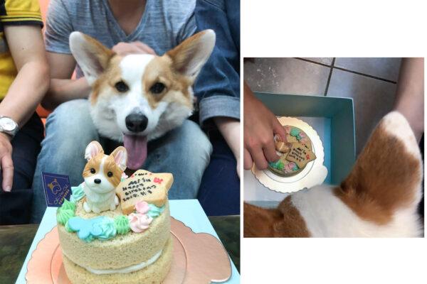 寵物狗狗客制蛋糕|吉快樂寵物蛋糕屋,超Q蛋糕!訂購方式&開箱文,Mi'lu生日有蛋糕吃了!
