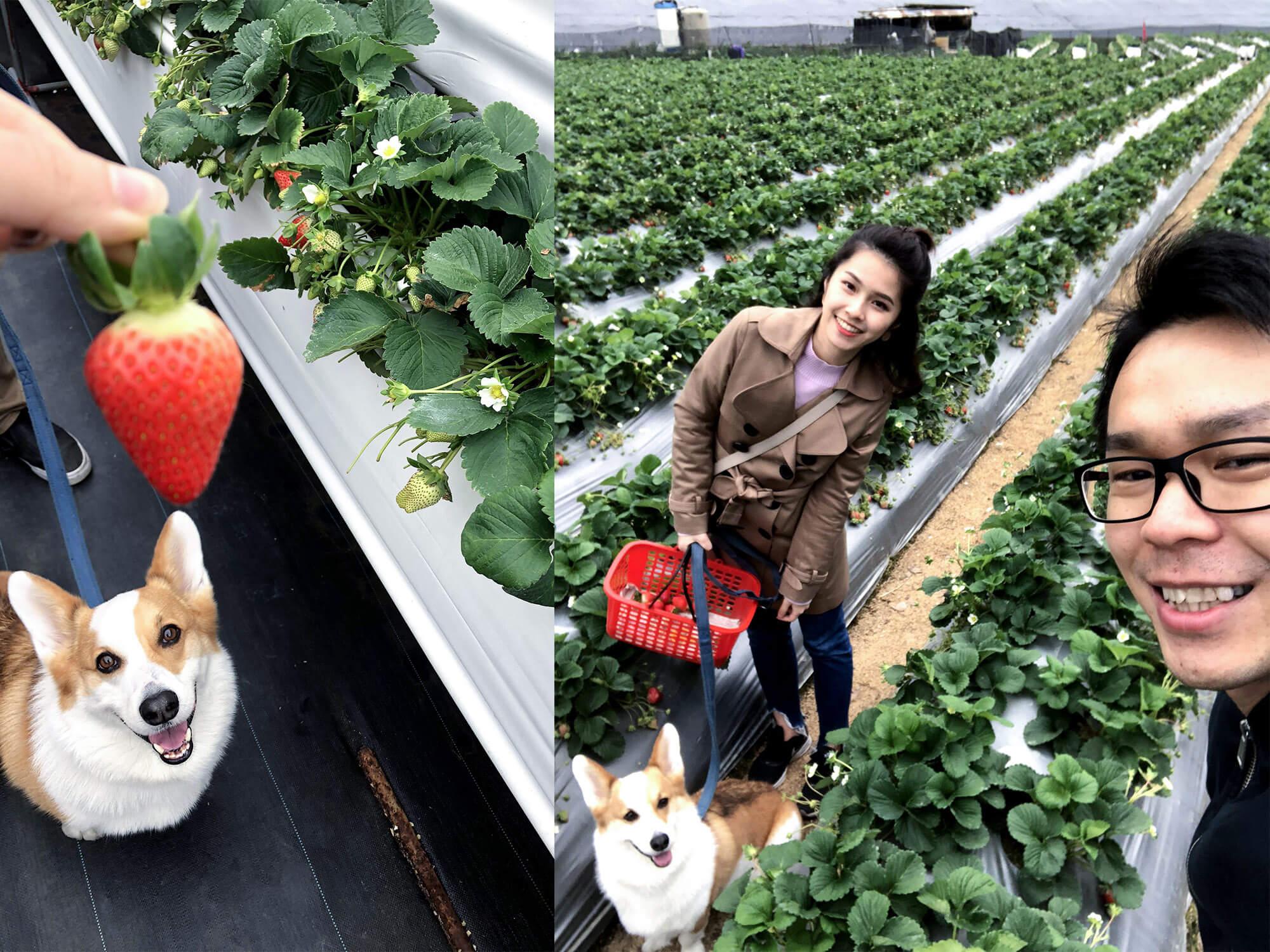 草莓園Milu