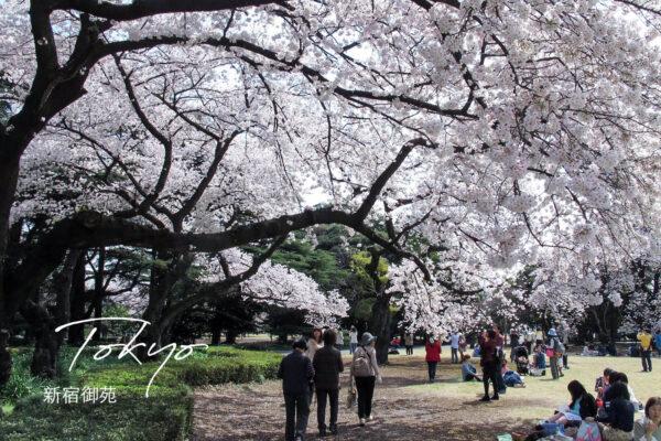 新宿御苑|四季均有不同美麗風景,全年最佳賞櫻、楓時間&導覽地圖。