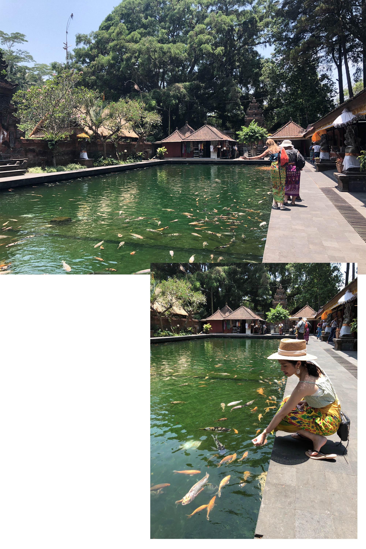 聖泉寺魚池
