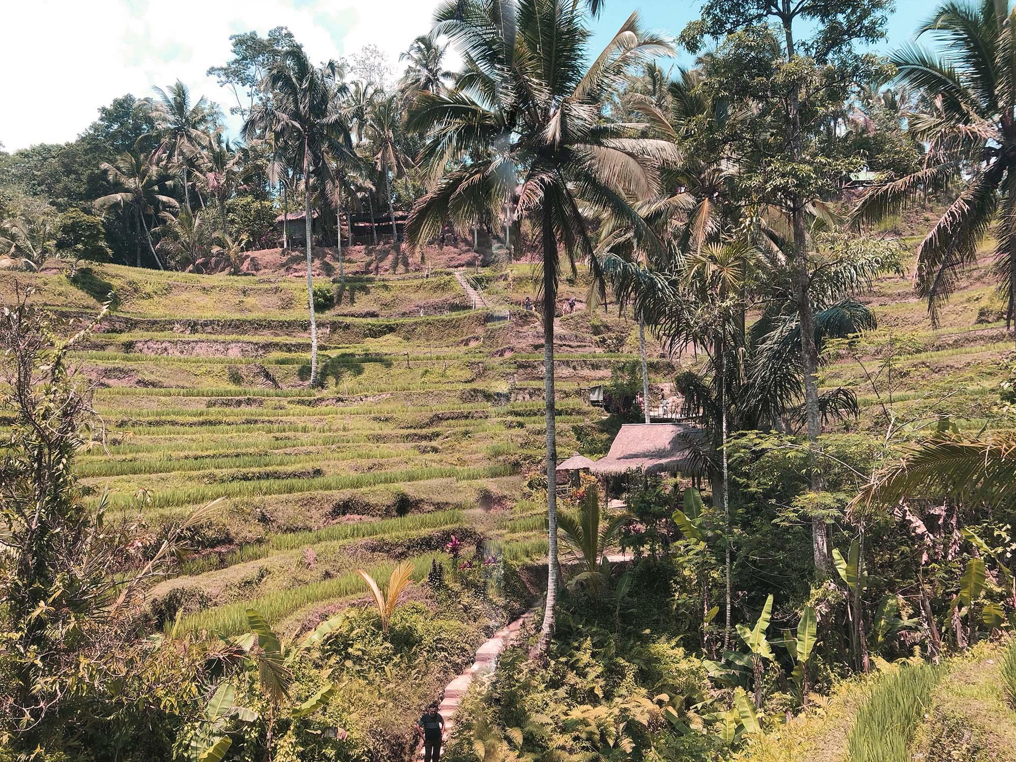 峇里島什麼天氣適合旅遊_德哥拉朗梯田