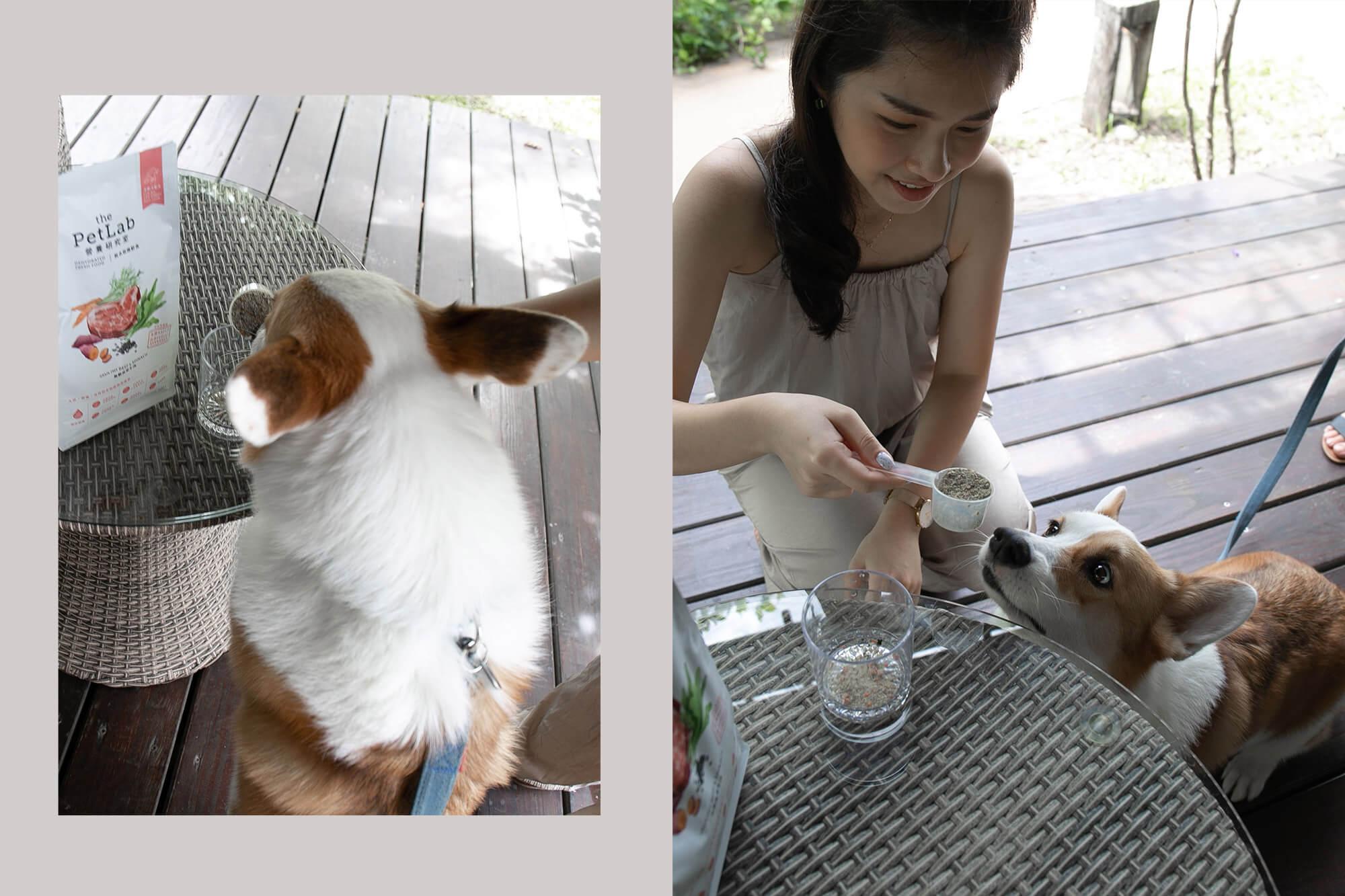 the Pet Lab營養實驗室狗狗鮮食,只要沖泡3分鐘!沖泡中