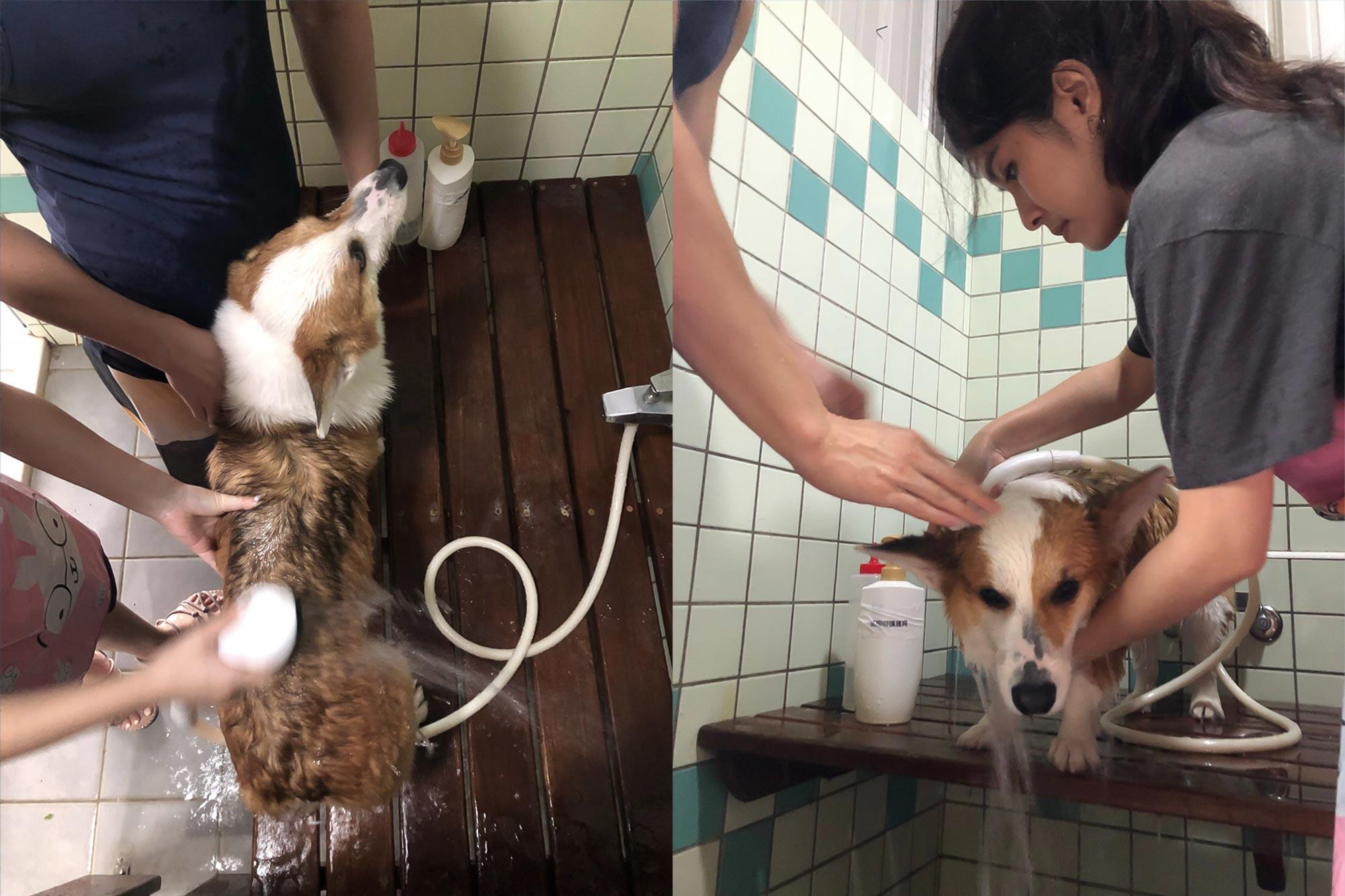 南庄麥克尼景觀莊園_寵物洗澡區1