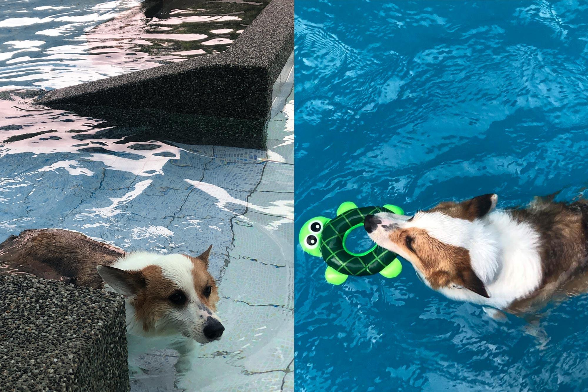 南庄麥克尼景觀莊園_寵物游泳池2