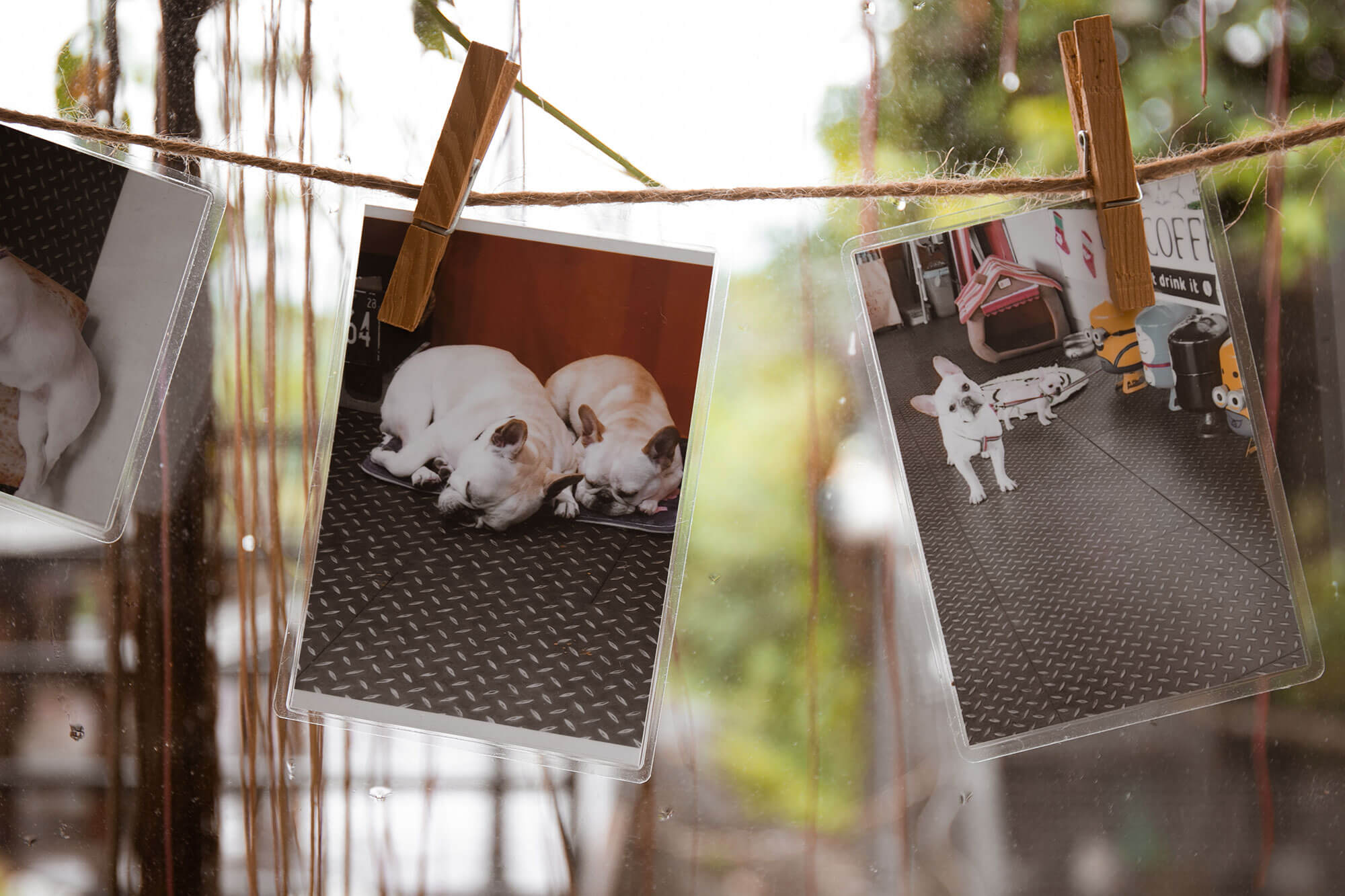 dog coffee_店內環境4