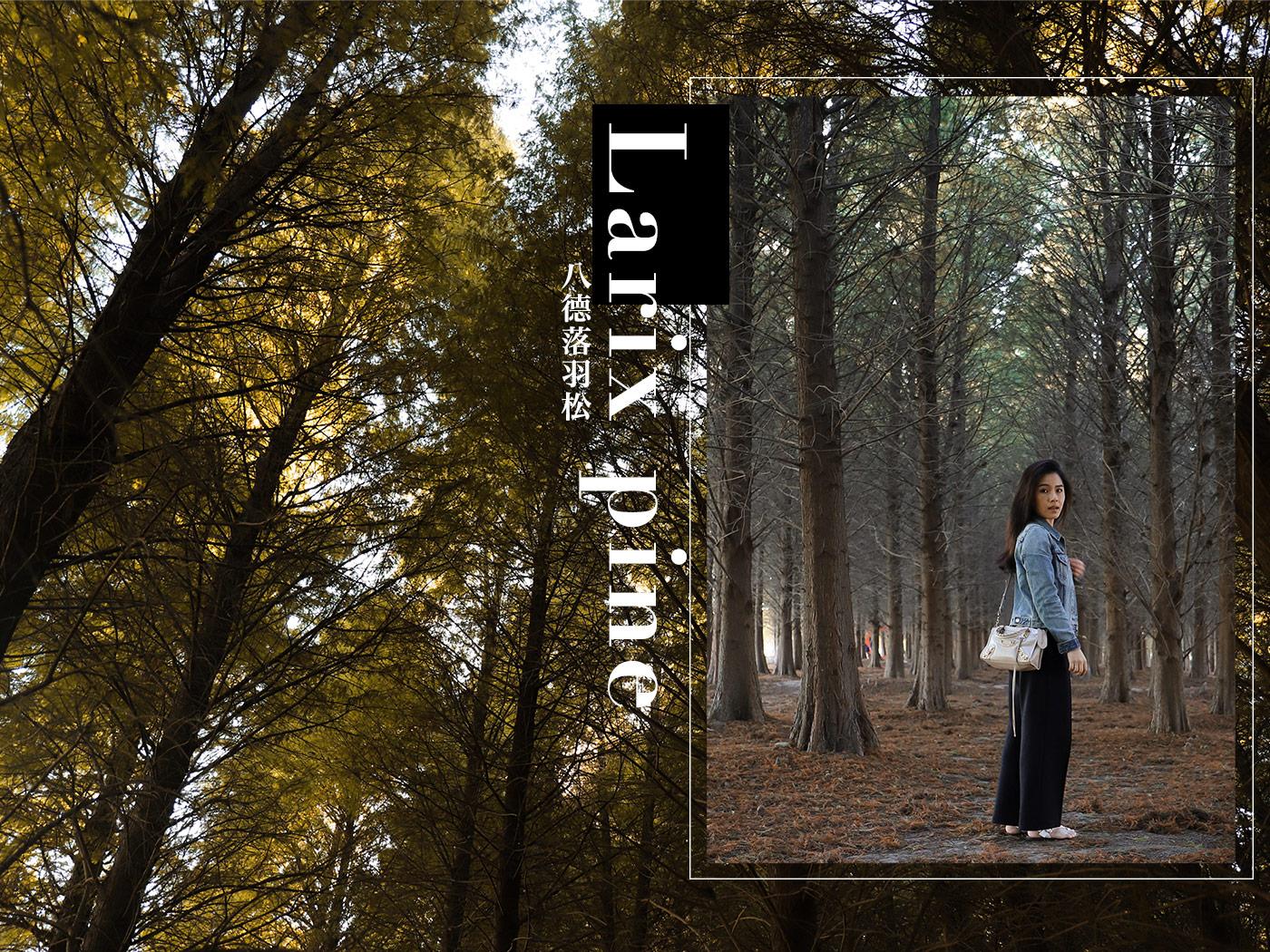 桃園大溪|秋冬出發!極美棕紅色的八德落羽松+粉紅大波斯菊秘境景點必看,IG打卡美景必收