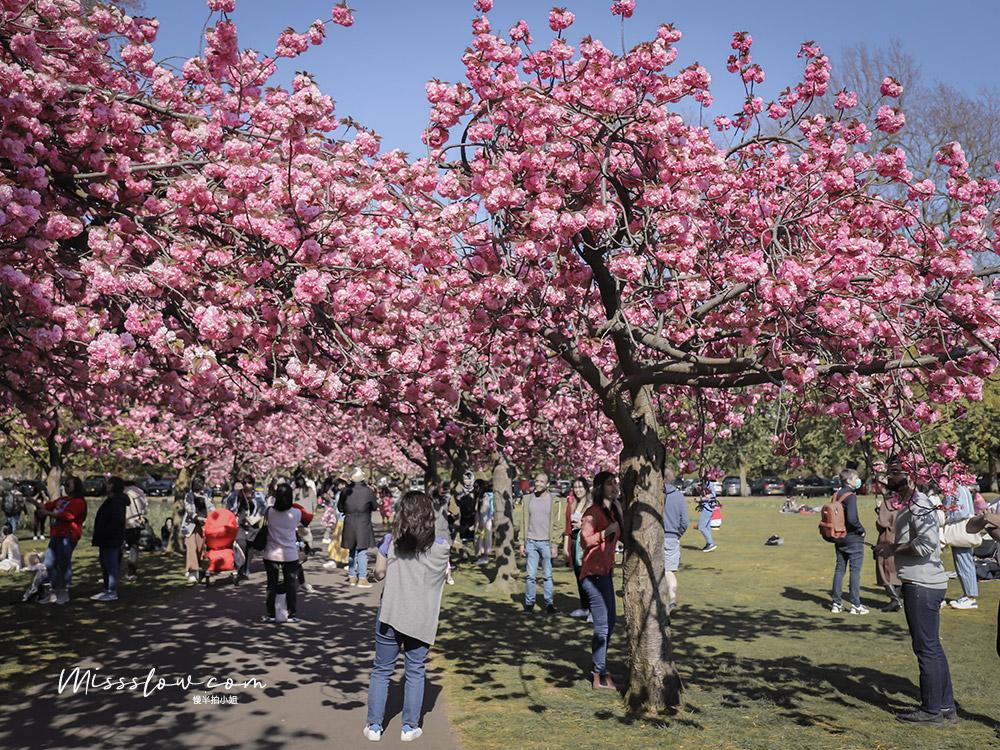 格林威治公園Greenwich Park 每年3-4月是這裡的櫻花季