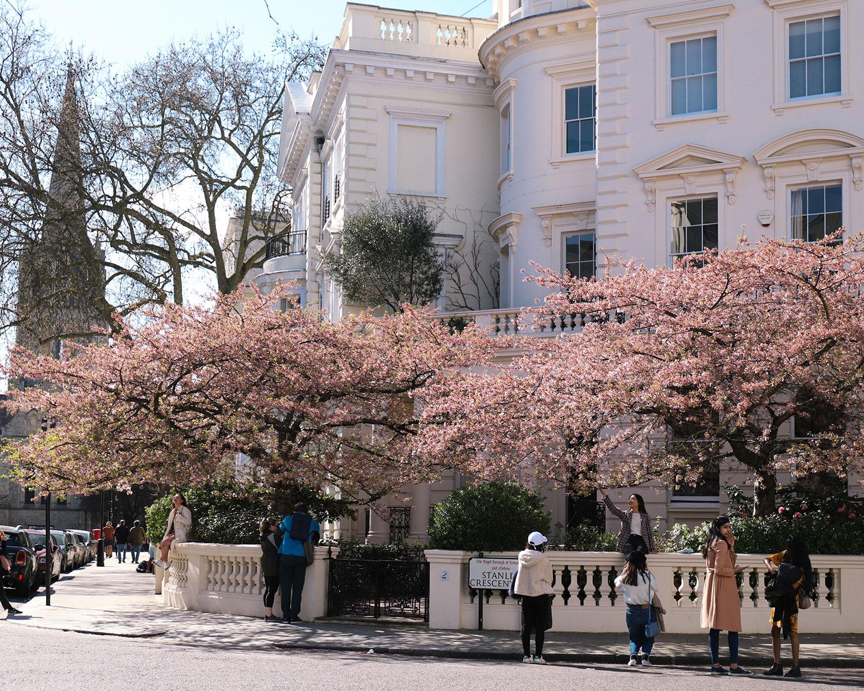 櫻花盛開中的諾丁丘Notting Hill