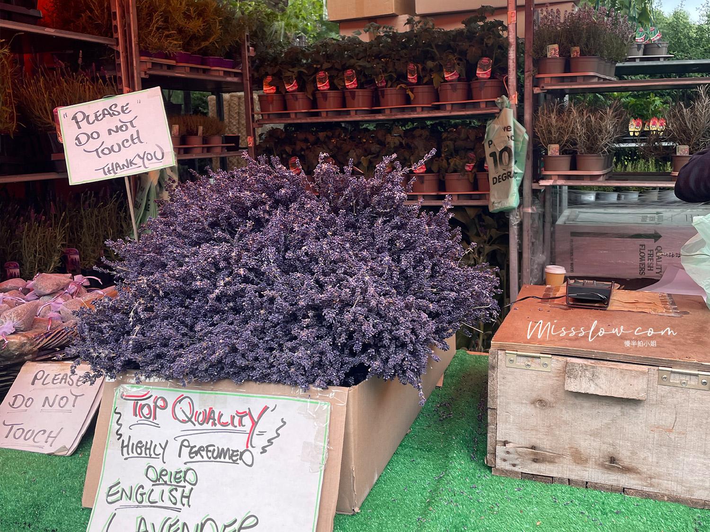 哥倫比亞花市 Lavender
