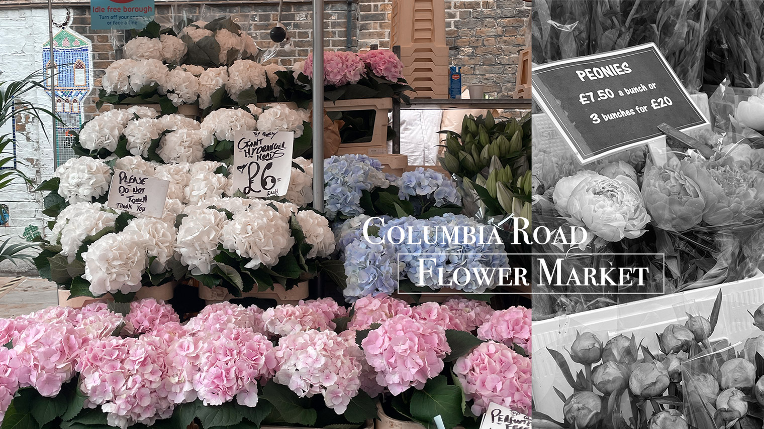 columbia road flower