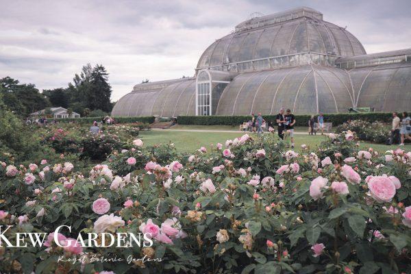 邱園Kew Gardens英國皇家植物園必看的8大重點!購票和交通方式(內含地圖和注意事項)